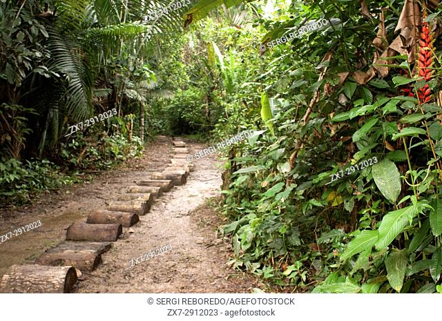 Way to get inside the Yagua village in the primary forest about 40 kilometers from Iquitos near the town of Indiana, Iquitos, Loreto, Peru