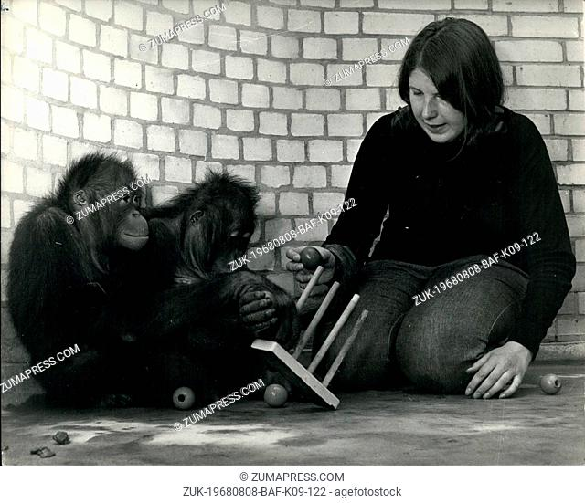 Aug. 08, 1968 - 'Living' with apes. 20-year old Barbara Burr, a student teacher is spending the next five week 'living' with two orangutans, at Chessington Zoo
