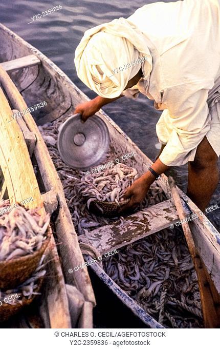 Kuwait November 1967. Fisherman Returning with a Small Boatload of Shrimp