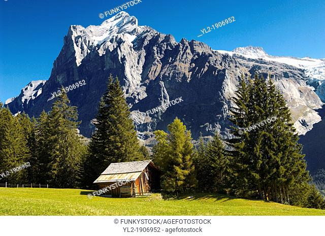 Alpine Pastures with Traditional houses-- Swiss Alps, Grindelwald, Switzerland