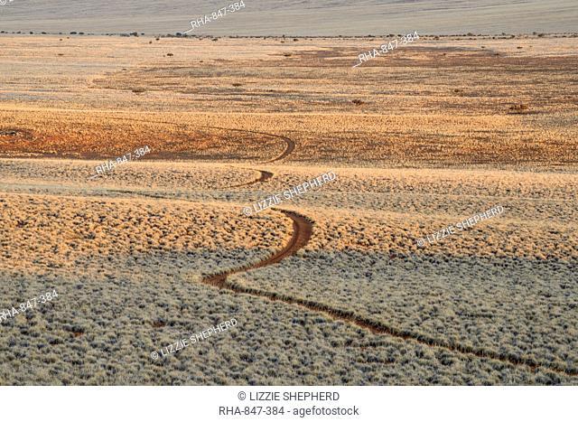 Early morning light on the track through the plains of NamibRand Nature Reserve, Namib Desert, Namibia, Africa