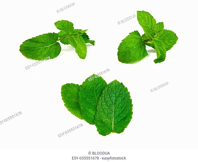 set of mint leaves isolated on a white background