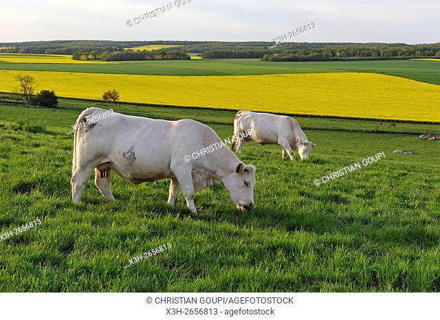 country landscape of Eure-et-Loir department, Region Centre-Val de Loire, France, Europe