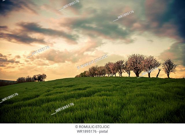 Trees in landscape against dramatic sky