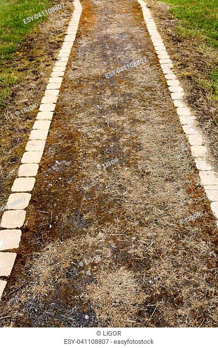 abandoned narrow pedestrian road, covered with grass and dry plants, closeup in the afternoon