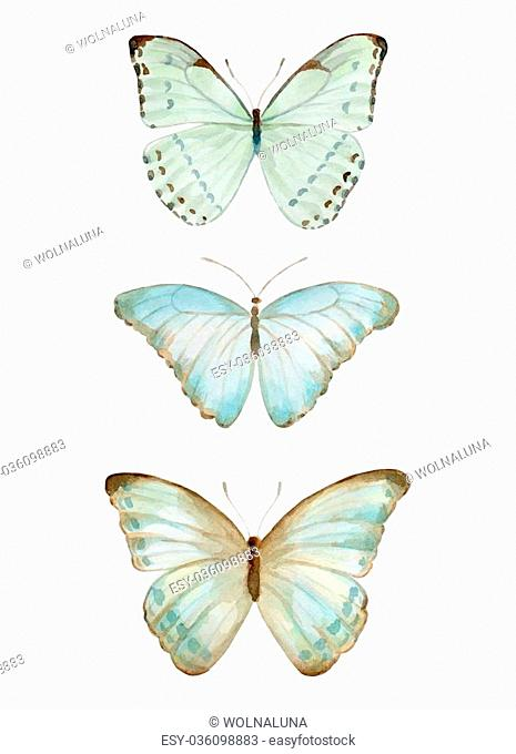 Butterfly Watercolor handmade colorful natural set isolated on white background