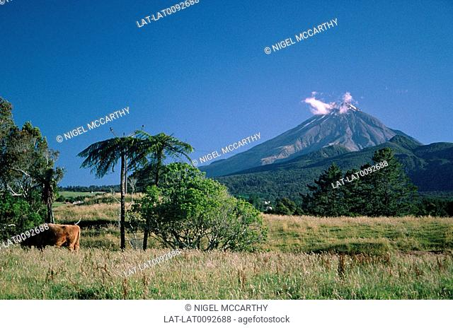 Mount Egmont. National park. Peak,volcanic cone. Wisp of cloud at top. Cow in field. Good farming land
