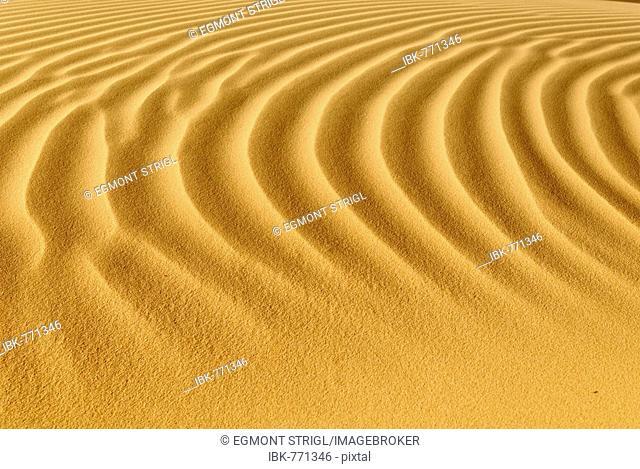 Sand dune, ripples, Tin Akachaker, Tassili du Hoggar, Wilaya Tamanrasset, Algeria, North Africa
