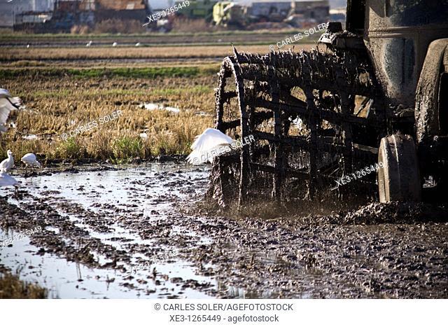 Tractor trabajando un campo de arroz (Albufera de Valencia)