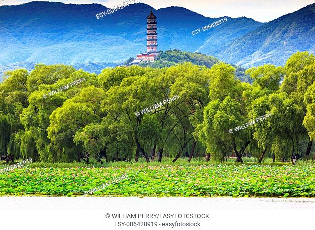 Yue Feng Pagonda Pink Lotus Pads Garden Willow Trees Summer Palace Beijing China