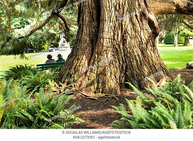 Elderly couple sit on a bench by an old tree in the garden in Beacon Hill Park, Victoria, BC, Canada