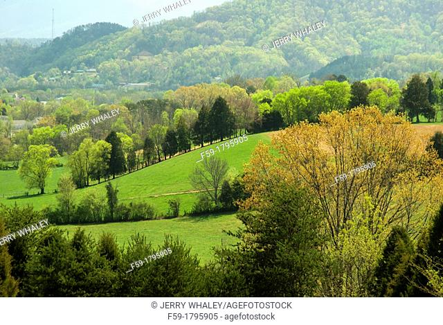 Spring, Green Landscape & Buds, East Tennessee