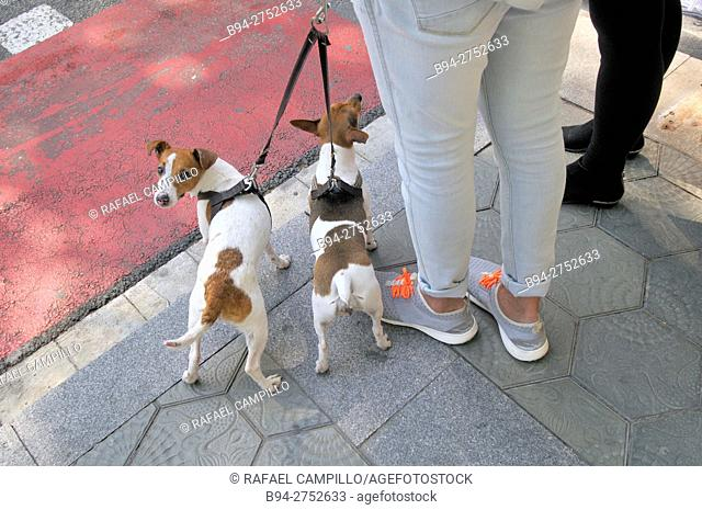 People with dogs. Barcelona, Catalonia, Spain