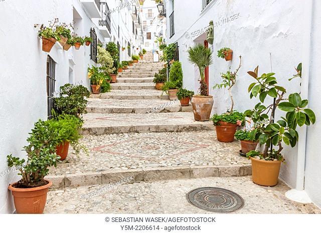 Frigiliana, La Axarquia - Costa del Sol, Malaga province, Spain, Europe