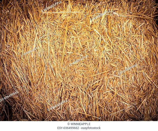 The closeup of rice straw texture background