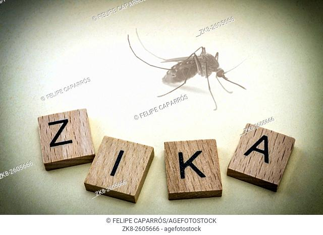 Tiger mosquito, causing the Zika virus in South america, medicine concept