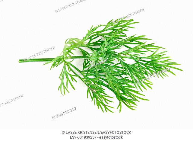 Delicious fresh dill from the garden
