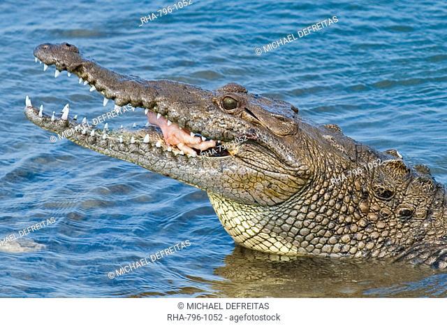Saltwater crocodile in Punta Sur Park, Isla de Cozumel Cozumel Island, Cozumel, off the Yucatan, Quintana Roo, Mexico, North America