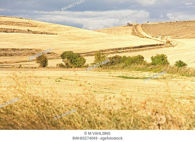 view over the Way of St. James through dried up meadow and field landscape at San Bol, Spain, Kastilien und Len, San Bol