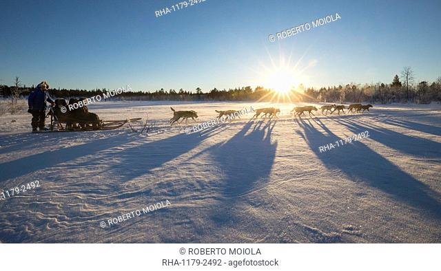 Dog sledding in the snowy landscape of Kiruna, Norrbotten County, Lapland, Sweden, Scandinavia, Europe