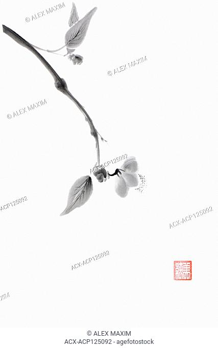 Close up of a sakura branch with a delicate blossom flower artistic oriental style illustration, Japanese Zen Sumi-e ink painting on white rice paper background