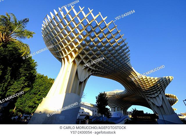 Metropol Parasol, known as Setas de Sevilla, the Mushrooms, is the world's largest wooden structure, Sevilla, Andalusia, Spain