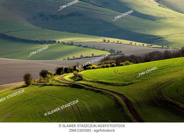 Spring afternoon in South Downs National Park, East Sussex, England