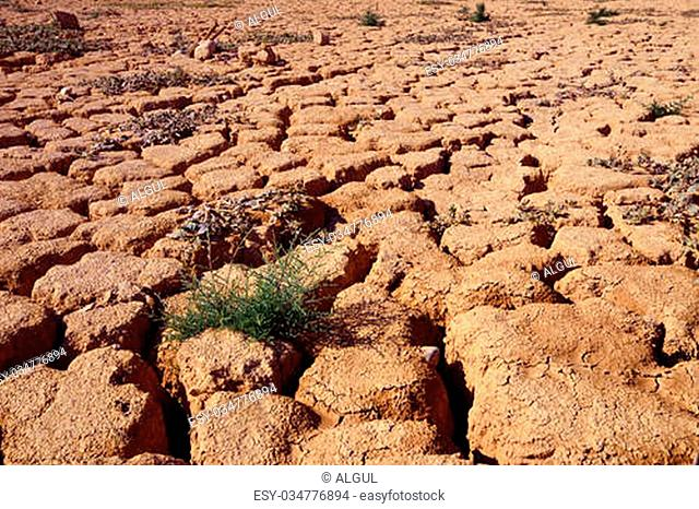 Dry cracked ground and green plants. Taken in Negev, Israel