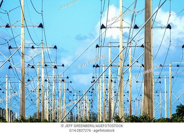 Florida, Miami, utility poles, Florida Power & Light, FPL, from Turkey Point Nuclear Generating Station