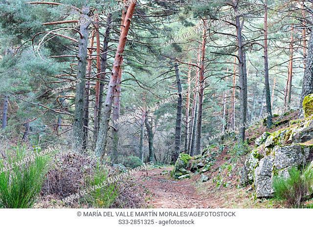 Hornillo road in the Sierra de Guadarrama. Robledondo. Madrid. Spain. Europe