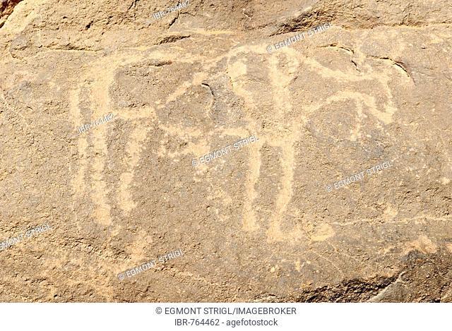 Prehistoric rock carving, ox, El Ghessour, Tassili du Hoggar, Wilaya Tamanrasset, Algeria, Sahara, North Africa