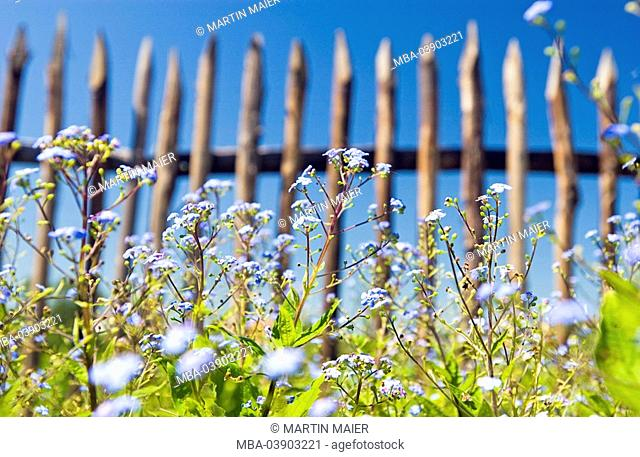 flower meadow, fence, detail, from below, meadow, meadow-flowers, field-flowers, forget-me-nots, flowers, bloom, bloom, prime, background