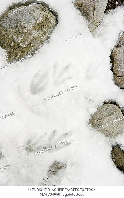Penguin tracks in the snow, Antarctica