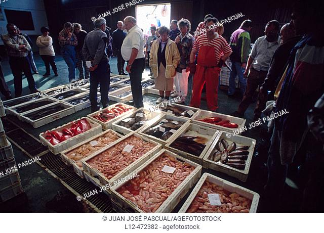 Auction at fish exchange, Santoña. Cantabria, Spain