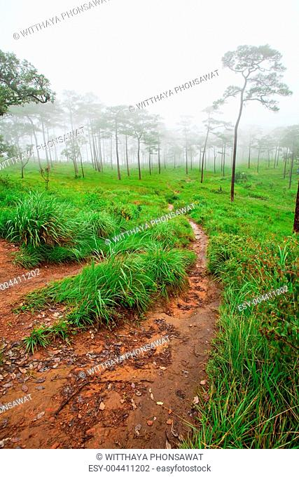 path in mist forest