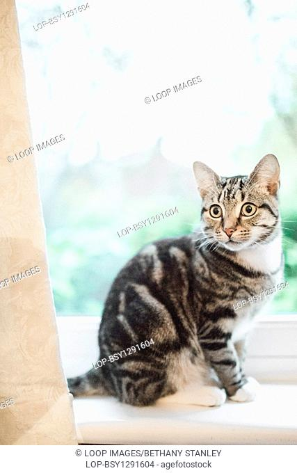 A young tabby cat sitting on a window sill