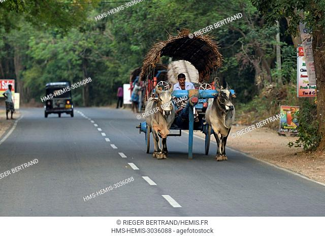 Sri Lanka, Central province, Matale District, Sigiriya, traditional cattle trolley