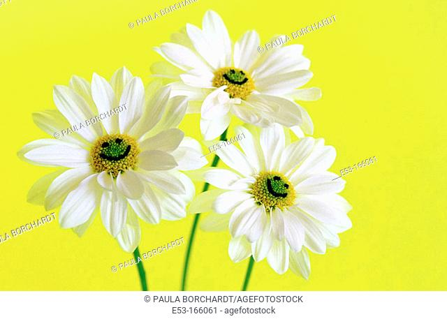 Three daisies with smiley faces