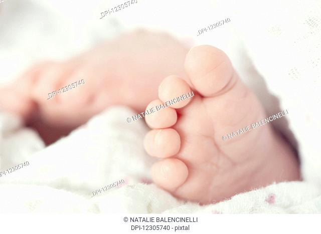 Close up of newborn baby toes and feet wrapped in white blanket; Toronto, Ontario, Canada