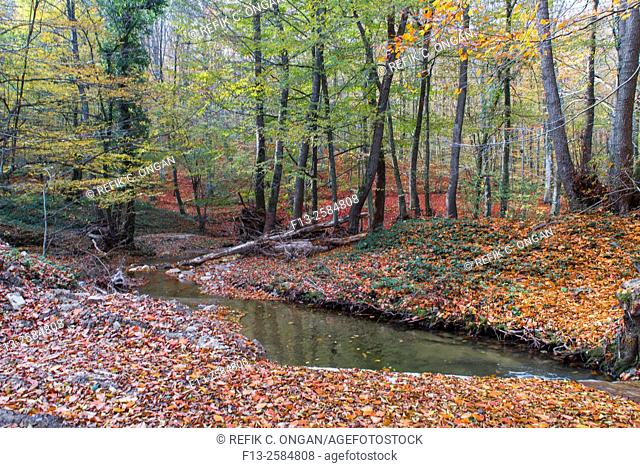wild forest and lake during fall in blacks region of Turkey