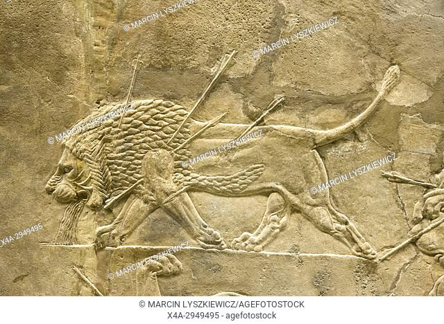 Lion Hunting - Assyrian Alabaster Bas-Relief depicting Dying Male Lion, Circa 645-635 BCE, British Museum, London