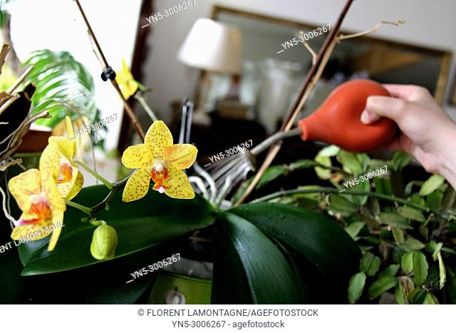 Watering indoor of an orchid with a pump