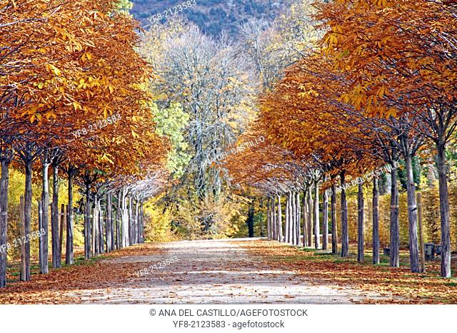 Autumn scenery Royal palace gardens and fountains in La Granja de San Ildefonso Segovia Spain