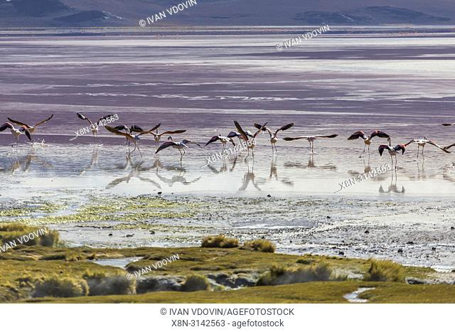 Laguna Colorada, Eduardo Avaroa National park, Potosi department, Bolivia