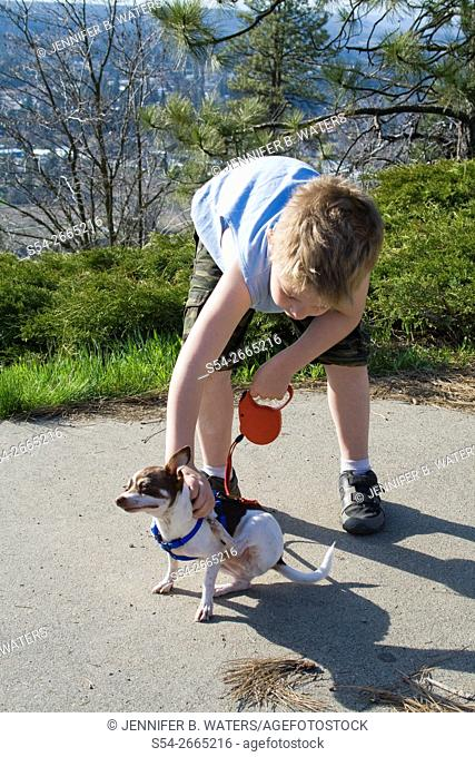 A boy helps a male chihuahua scratch his back during a walk in Spokane, Washington, USA