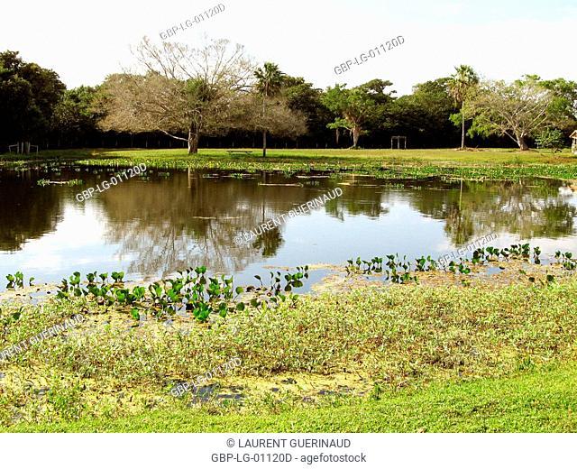 Landscape, Nature, Pantanal, Mato Grosso do Sul, Brazil