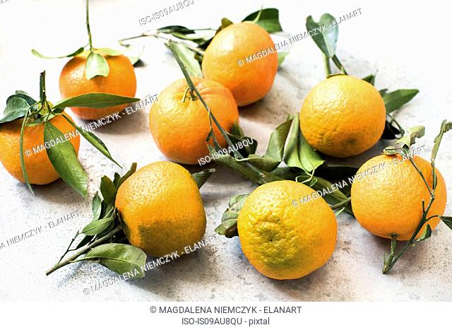 High angle view of oranges with leaves