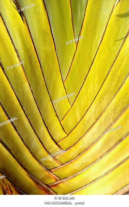 ORNAMENTAL PALM CLOSE UP