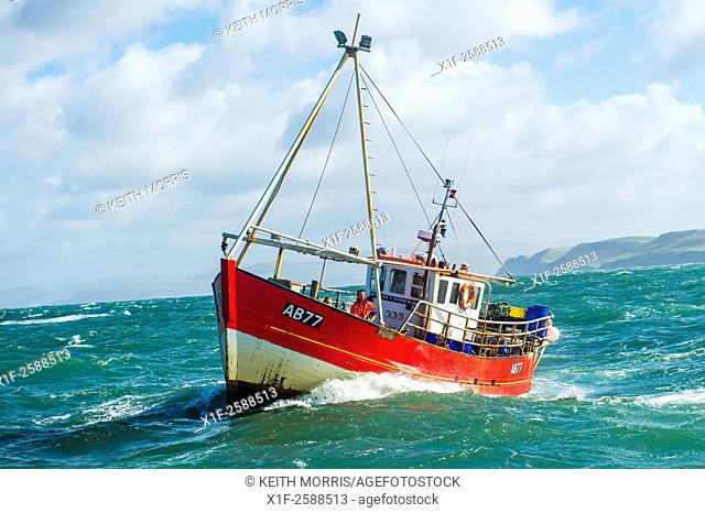 Inshore fishing in Cardigan Bay : a small lobster and crab fishing boat working out of Aberystwyth harbour, Ceredigion west Wales UK