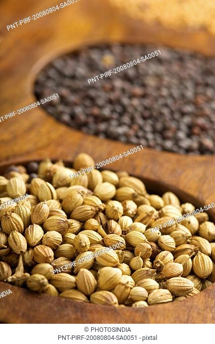 Close-up of coriander seeds in a spice container